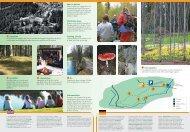 sanatorieskog - till tryck - upplevelseriket