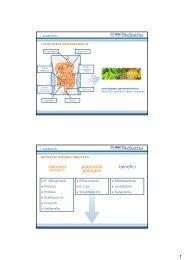 I Probiotici (DIA).pdf - Wolfdesign.it