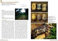 Kinixys homeana - Association du refuge des tortues