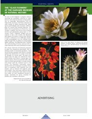 ADVERTISING - Elements