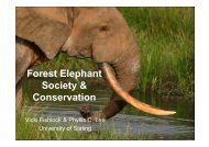 Forest Elephant Society & Conservation - University of Stirling