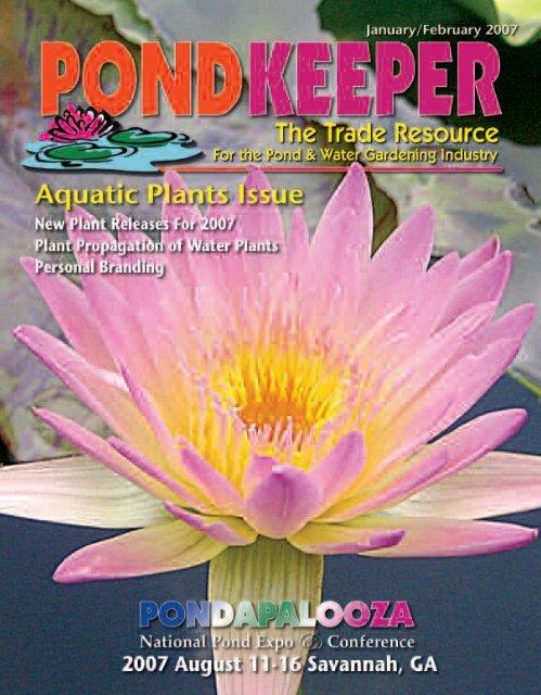 Pond And Aquarium  Mini Water Lily Plant 1 Live dormant Seedling