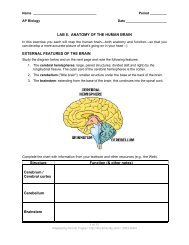 LAB 8. ANATOMY OF THE HUMAN BRAIN ... - Explore Biology