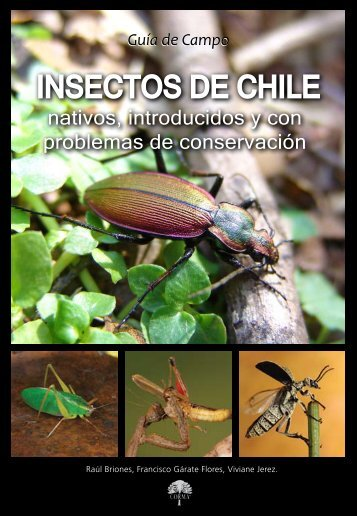 insectos_chile_2012