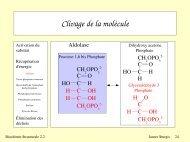 Clivage de la molécule - LISM