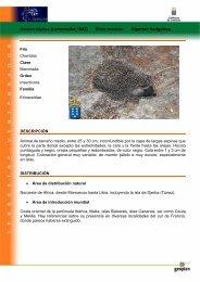 Atelerix algirus (Lereboullet,1842) Erizo moruno ... - Interreg Bionatura