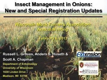 Insect management in onions