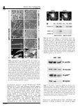 Biological activity of substrate-bound basic fibroblast growth factor ... - Page 6
