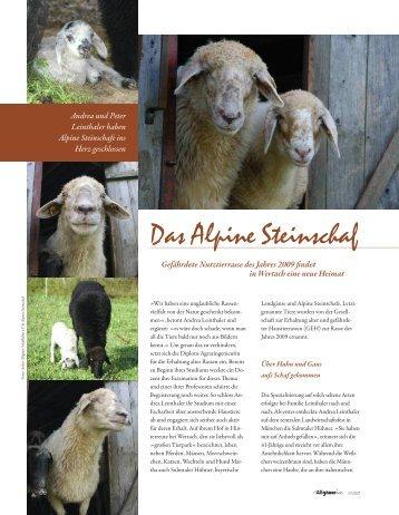 Die Allgäuerin – Das Alpine Steinschaf - 18.07.09 - Alpines Steinschaf