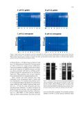 Proteases associated with programmed cell death of ... - Page 7
