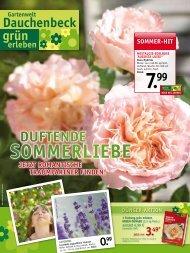 sommeR-Hit - Gartenwelt Dauchenbeck
