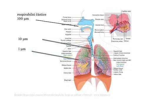 Zdravotní dopady a rizika znečištěného ovzduší - Krajská hygienická ...