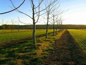 Le fonctionnement d'une parcelle agroforestière - INRA Montpellier