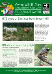 Wild About Gwent August 2011.pdf - Gwent Wildlife Trust