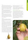 lees verde - Veiling Hoogstraten - Page 7