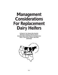 Management Considerations For Replacement Dairy Heifers