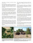 Part 2 here - El Camino Real International Heritage Center - Page 5