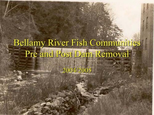 Bellamy River Fish Communities, Pre and Post Dam ... - VHB.com