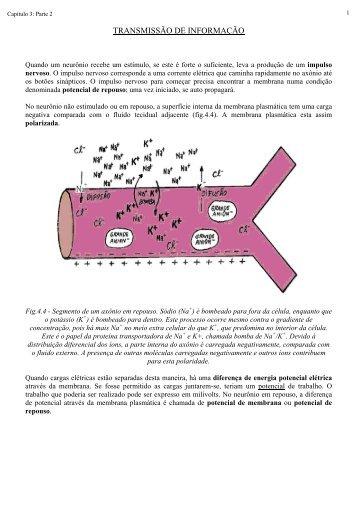 Transmissão do impulso nervoso - Laboratório de Biologia - IFSC
