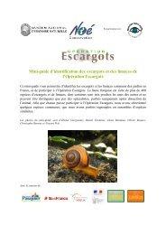 Mini-guide d'identification des escargots et des limaces de l ...
