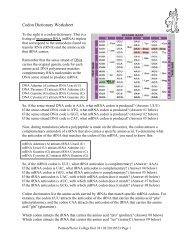Codon Dictionary Worksheet - Pierce College