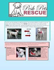 Trying to get a dog adopted can often be difficult ... - Posh Pets Rescue