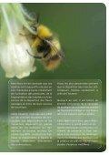 Fleurs sauvages et prairies fleuries pour nos pollinisateurs, guide ... - Page 3