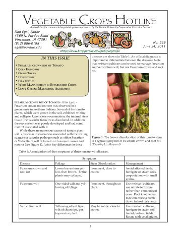 A newsletter for commercial vegetable growers prepared by
