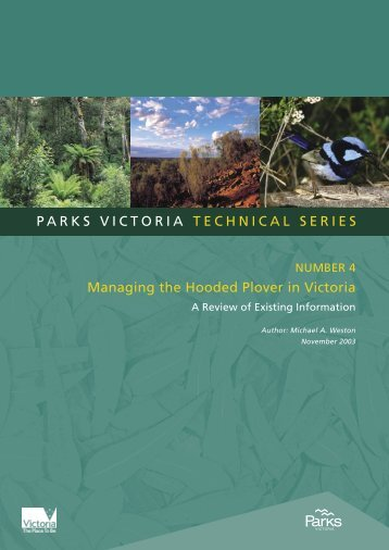 Managing the Hooded Plover - Parks Victoria
