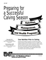Cow Nutrition Prior to Calving