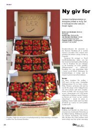 Ny giv for jordbærdyrking. - Fagbladet Økologisk Landbruk