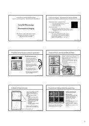 Live Cell Microscopy Fluorescence Imaging - Biomedicum Imaging ...