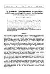 Zur Kenntnis der Gattungen Boophis, Aglyptodactylus und ...