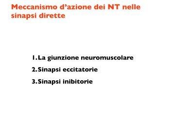 Meccanismo d'azione dei NT nelle sinapsi dirette - CPRG