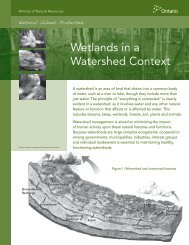 Wetlands in a Watershed Context - Ministry of Natural Resources ...