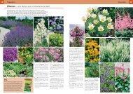 PDF 2 - Roth Pflanzen AG