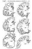 Die myeloarchitektonische Gliederung des Stirnhirns beim ... - Page 7