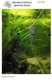April 2011 (PDF) - Hamilton & District Aquarium Society