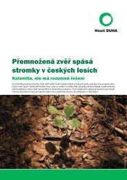 Přemnožená zvěř spásá stromky v českých lesích