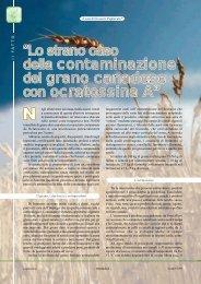 """""""Lo strano caso della contaminazione del grano ... - Tutto Sanità"""
