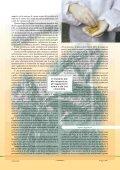 """""""Lo strano caso della contaminazione del grano ... - Tutto Sanità - Page 2"""