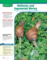 Chapter 27: Mollusks and Segmented Worms