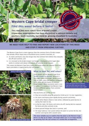 Low resolution (pdf 2202 KB) - Weeds Australia