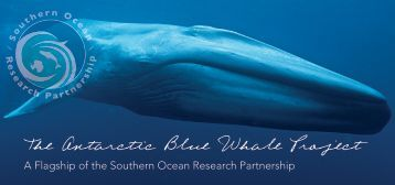The Antarctic Blue Whale Project