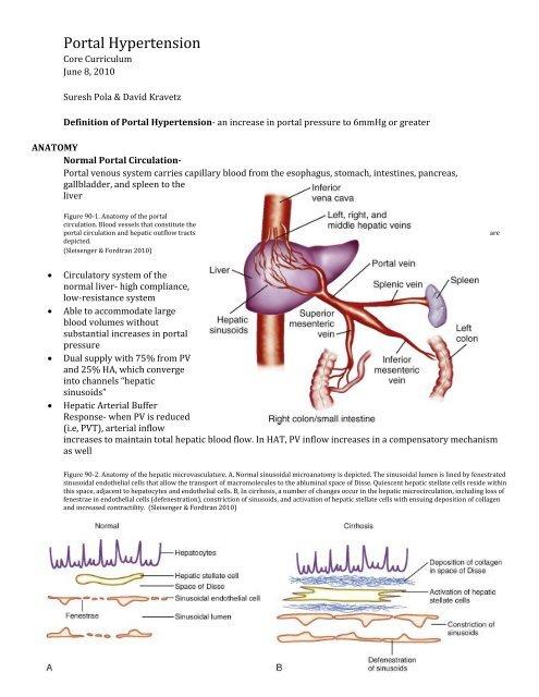 Portal Hypertension-Pola 060810
