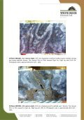 20130529 Red Rock Prospect - White Rock Minerals - Page 3