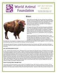 Along with the bald eagle, the bison perhaps best symbolizes the ...