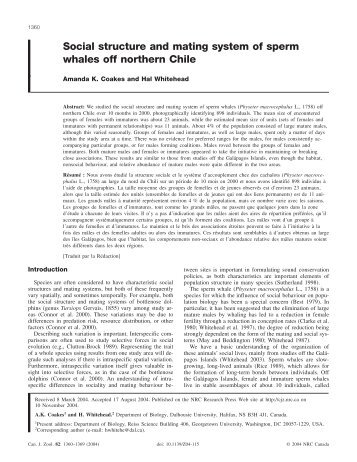 Social structure and mating system of sperm whales off northern Chile