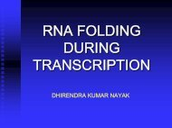 RNA FOLDING DURING TRANSCRIPTION