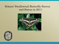 Schaus' Swallowtail Butterfly Survey and Status in 2011